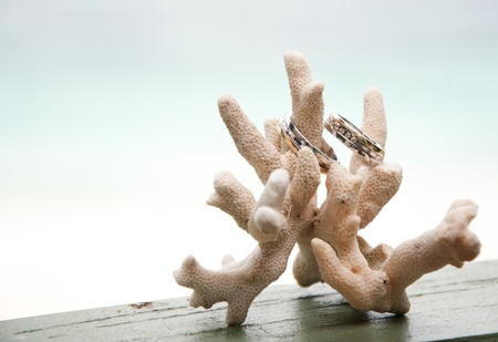 Two wedding rings on coral in front of the seaside Stock Photo - 16459390