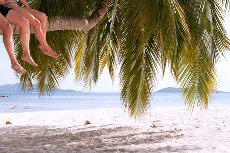 Legs of couple sitting on palm tree on a paradise island  photo