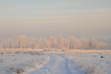 Winter trees in the snow at sunrise Stock Photo - 1533865