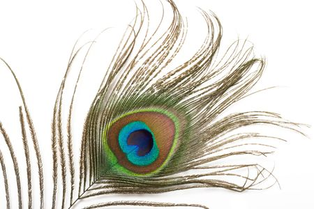 plumas de pavo real: Pluma de pavo real cerca