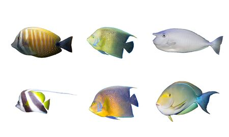 fished: Selection of multicolored tropical fished isolated isolated on white Stock Photo