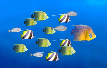 Leadership concept - big fish leading school of tropical fishes Stock Photo - 3091388