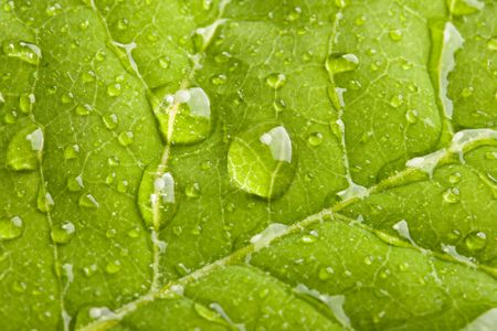 Green leaf with water droplets macro photo
