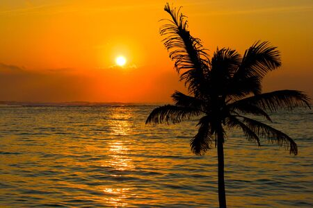 Tropical sunset scene with palm photo