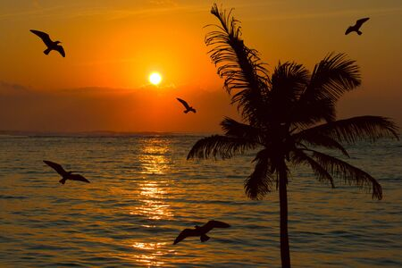 eventide: Tropical sunset scene with palm and seagulls Stock Photo