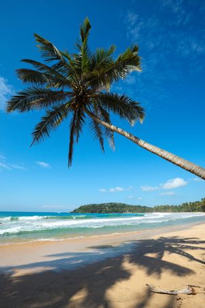 Tropical paradise idyllic beach with palm. Sri Lanka photo