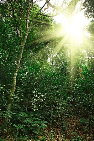 Sunlight in tropical jungle forest Stock Photo - 7594251