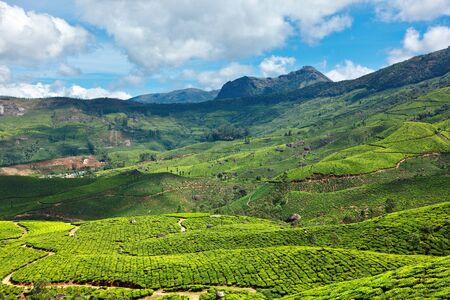Plantaciones de té. Munnar, Kerala, India