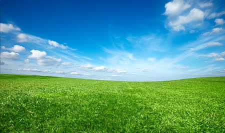Field of green fresh grass under blue sky Stock Photo - 7938468