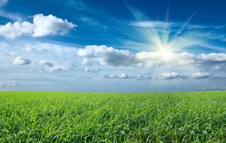 sund: Sunset sun and field of green fresh grass under blue sky