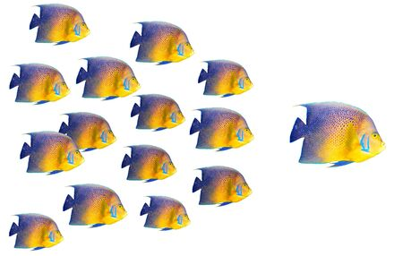 Big fish leading others Stock Photo - 7937972