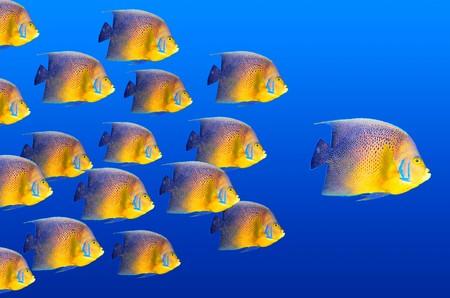 Big fish leading others photo