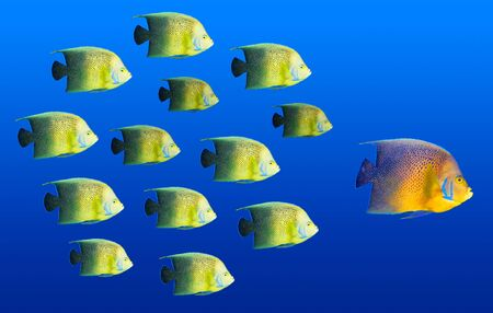 Leadership concept - big fish leading school of tropical fishes photo
