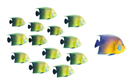 Leadership concept - big fish leading school of tropical fishes Stock Photo - 7937945