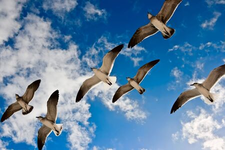 Seagulls flying in the air photo