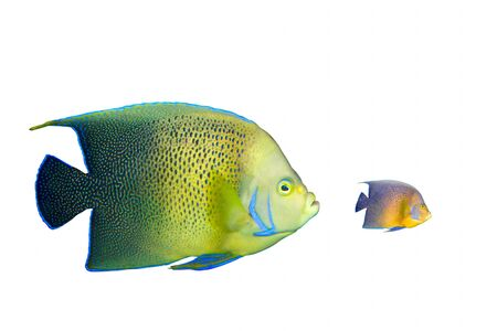 Big fish chasing small fish Stock Photo - 7937811
