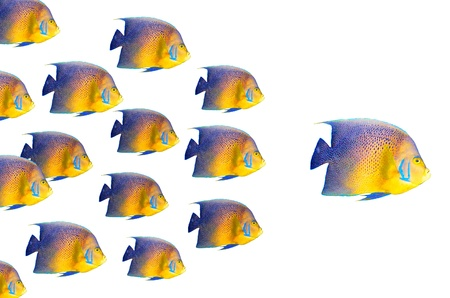Big fish leading others Stock Photo - 8363865