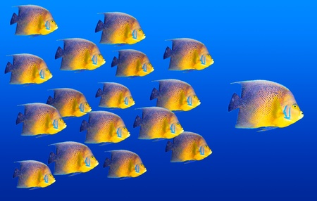 followers: Big fish leading others Stock Photo