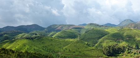 Panorama of tea plantations. Munnar, Kerala, India photo