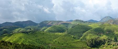 munnar: Panorama of tea plantations. Munnar, Kerala, India