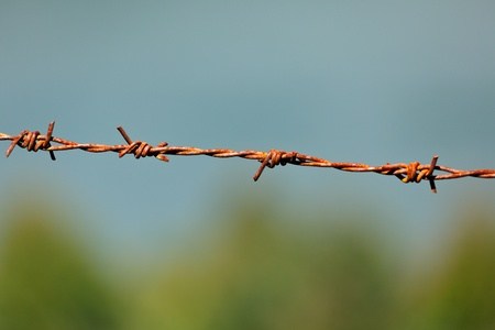 Rusty steel barbed wire on blurred background photo