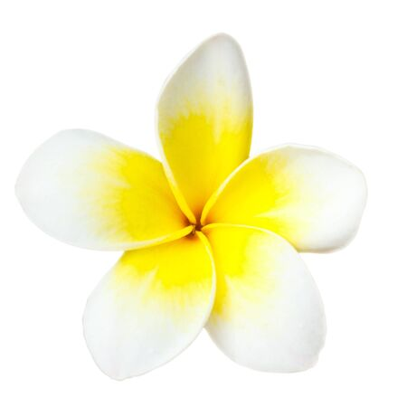 blosom: White tropical flower frangipani closeup isolated on white background