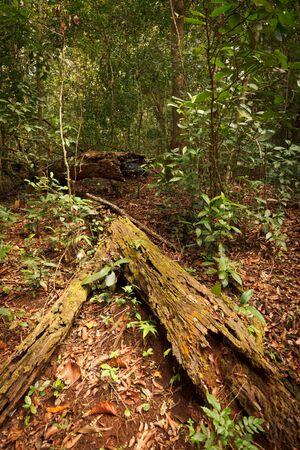 Tropical forest. Periyar wildlife sanctuary, Kumily, Kerala, India photo