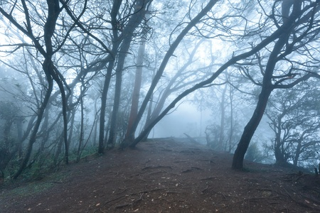 Misty scary forest in thick fog photo