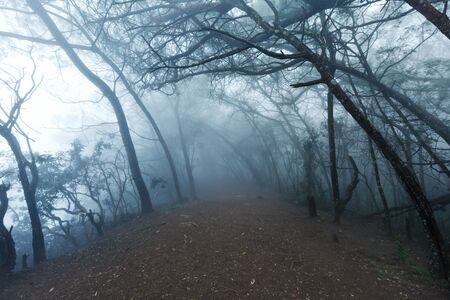 spooky tree: Misty scary forest in thick fog