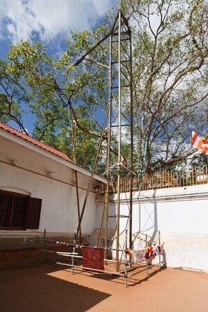 anuradhapura: Sri Maha Bodhi Tree. Anuradhapura, Sri Lanka