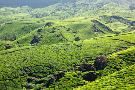 south india: Tea plantations. Munnar, Kerala, India Stock Photo