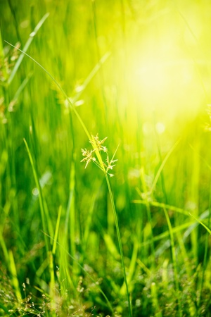 shallow depth of field: Green grass - very shallow depth of field