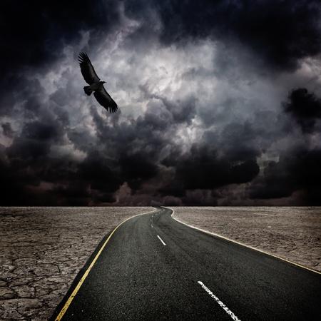 Storm, bird, road in desert photo
