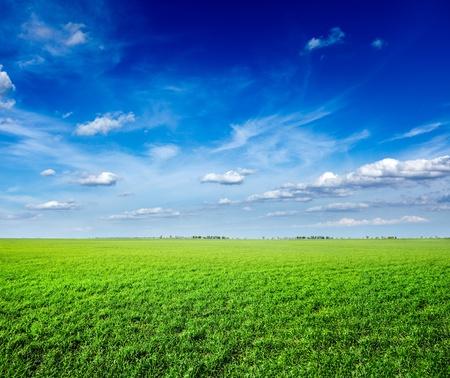 clouds blue sky: Field of green fresh grass under blue sky