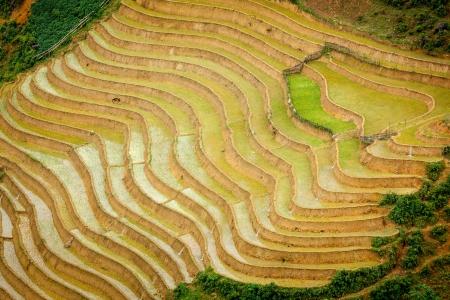 soil conservation: Rice field terraces (rice paddy). Near Cat Cat village, near Sapa, Mui Ne