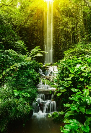 waterfall in forest: Tropical waterfall in forest
