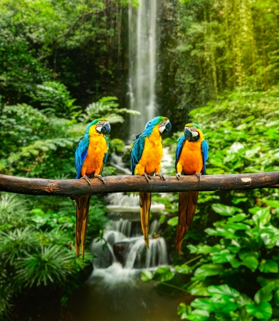 birds scenery: Blue-and-Yellow Macaw (Ara ararauna), also known as the Blue-and-Gold Macaw Stock Photo