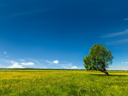 Spring summer background - blooming flowers green grass field meadow scenery lanscape under blue sky with single lonely tree photo