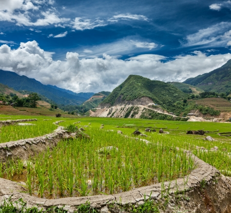 soil conservation: Rice field terraces (rice paddy). Near Cat Cat village, near Sapa, Vietnam Stock Photo