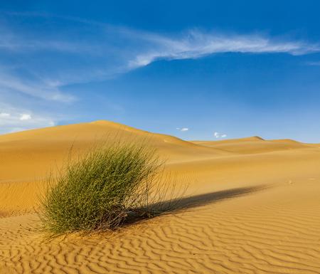 plantas del desierto: Dunas del desierto de Thar. Sam Sand Dunes, Rajasthan, India Foto de archivo