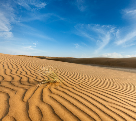 thar: Dunes of Thar Desert. Sam Sand dunes, Rajasthan, India