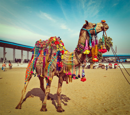 Vintage retro hipster style travel image of decorated camel at Pushkar Mela (Pushkar Camel Fair). Pushkar, Rajasthan, India Editorial