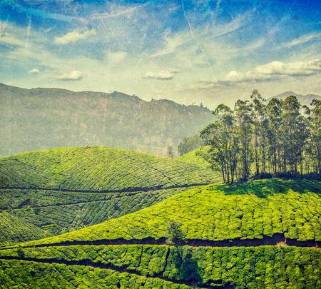 tea plantations: Vintage retro hipster style travel image of tea plantations with grunge texture overlaid. Munnar, Kerala, India
