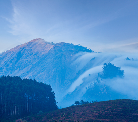 Kerala India travel background - sunrise and tea plantations in Munnar, Kerala, India photo