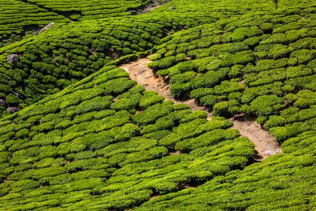 munnar: Kerala India travel background - green tea plantations in Munnar, Kerala, India - tourist attraction