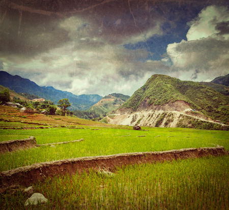 paddy fields: Vintage retro hipster style travel image of rice field terraces (rice paddy) with grunge texture overlaid. Near Cat Cat village, near Sapa, Vietnam