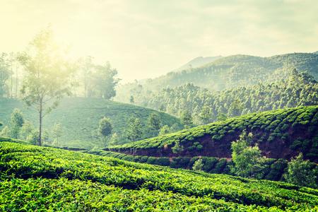 tea plantations: Vintage retro hipster style travel image of Kerala India travel background - green tea plantations in Munnar, Kerala, India in the morning on sunrise