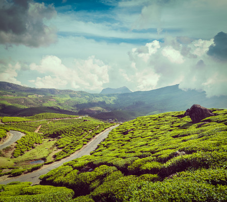 munnar: Vintage retro hipster style travel image of Kerala India travel background - road in green tea plantations in mountains in Munnar, Kerala, India Stock Photo