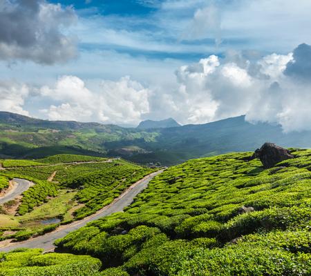 munnar: Kerala India travel background - road in green tea plantations in mountains in Munnar, Kerala, India