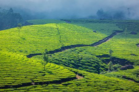 Fondo de viajes de Kerala India - plantaciones de té verde en Munnar, Kerala, India - atracción turística